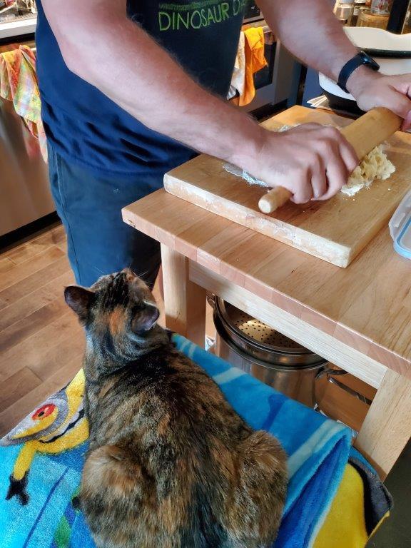 Cat helping.